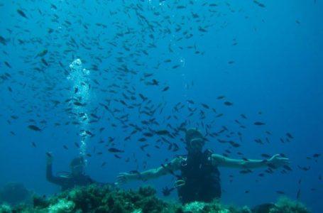 Poseidon Diving Academy