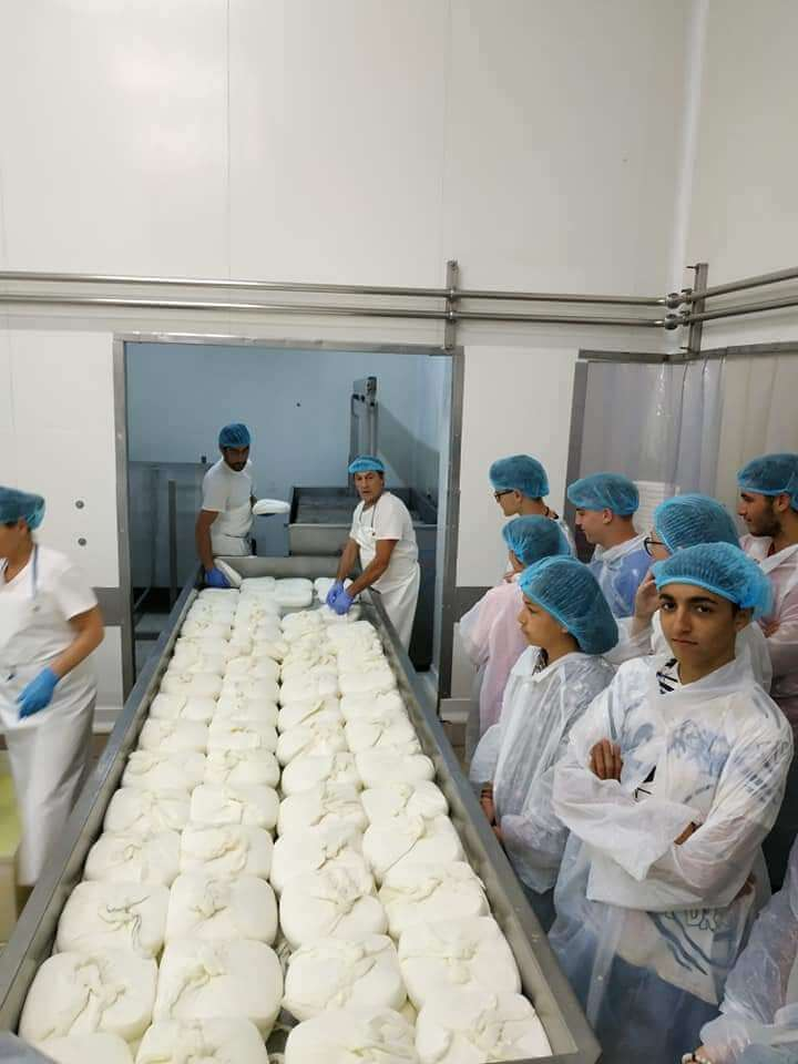 sithonia cheese story factory production