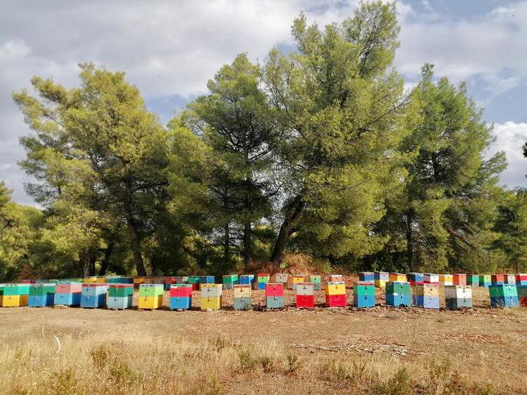 sithonia honey bee hives