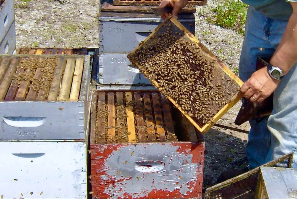 sithonia honey beekeeper hives