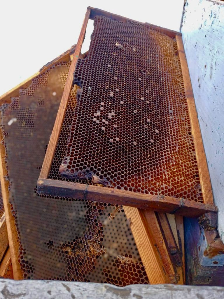 sithonia honey hive